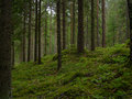 A finnish forest typical on cloudy afternoon near iitti finland Stock Photo