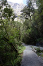 Fiordland new zealand milford walking track in Royalty Free Stock Photos