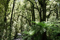 Fiordland new zealand rain forest in Stock Image
