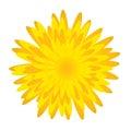 Fiore di Dandelion.Spring Fotografie Stock Libere da Diritti