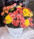 Fiore rosso e giallo Immagini Stock Libere da Diritti
