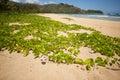 Fiori sulla spiaggia della baia di Hanalei. Immagine Stock Libera da Diritti