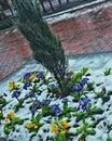 Fioritura di inverno Immagine Stock