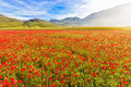 Fioritura at Piano Grande with Castelluccio, Umbria, Italy Royalty Free Stock Photo
