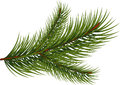 Fir branch over white background Royalty Free Stock Photos