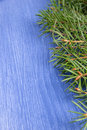 Fir branch on wood surface Royalty Free Stock Image