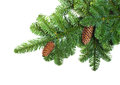 Fir branches with cones Royalty Free Stock Images