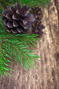 Fir branches and cones on an old tree Royalty Free Stock Image