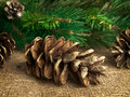 Fir-cone Stock Photo