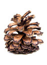 Fir cone isolated on the white background Royalty Free Stock Images