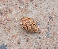 Fir cone in sand Royalty Free Stock Photo