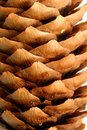 Fir cone texture Royalty Free Stock Photography