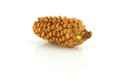 Fir cone on the white background Royalty Free Stock Photo