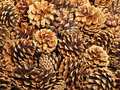 Fir cones taken closeup.Background. Stock Image