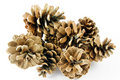 Fir cones on white Stock Photo