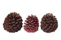 Fir cones on white background Royalty Free Stock Photos