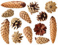 Fir and pine cones Stock Photo