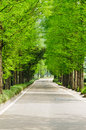 Fir road the chinese of spring Royalty Free Stock Images