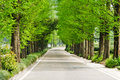 Fir road the chinese of spring Stock Photography