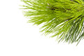 Fir tree branch Stock Photos
