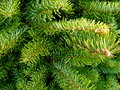 Fir tree branch closeup of green branches on christmas lot Royalty Free Stock Images