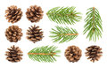 Fir tree branch and pine cones isolated on white background Royalty Free Stock Photo