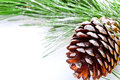Fir tree branch with pinecone on white background Stock Photography