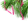 Fir tree branch with serpentine closeup on white background Royalty Free Stock Image