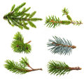 Fir tree branch set Royalty Free Stock Photo