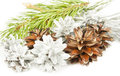 Fir tree branch and silver with brown cones on white