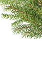 Fir tree branches isolated on white background Stock Images