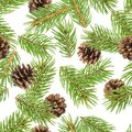 Fir tree branches seamless pattern, pine branch, Christmas conifer isolated on white background