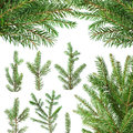 Fir tree branches set of isolated on white background Royalty Free Stock Photography