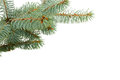 Fir tree isolated on white Stock Image