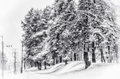 Fir tree at the road trees under snow in moscow region russia hygh tonality Royalty Free Stock Image