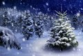 Fir tree in snowy night Royalty Free Stock Photo