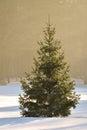 Cristmas tree daylight in winter Royalty Free Stock Photo