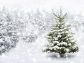 Fir tree in thick snow outdoor shot of a nice little for the perfect christmas mood Royalty Free Stock Photo