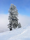 Fir tree at wintry slope snowy winter landscape Stock Photo