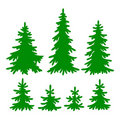 Fir-trees Royalty Free Stock Photo