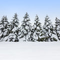 Fir trees covered by snow, winter beauty Stock Photos