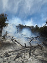 Fire area smoke rising from a partially burned forest Stock Image
