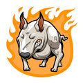 Fire Bullterrier Stock Photo
