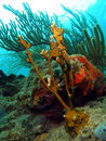 Fire Coral and Sea Rod Stock Photography