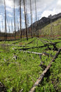 Fire devastation the results of in banff national park alberta canada Stock Photo