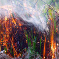 Fire drought grass ash background fog Royalty Free Stock Photos