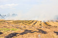 Fire on dry grass and trees inflated by a strong wind Royalty Free Stock Photos