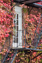 Fire escape ivy covered building exterior with Stock Photos