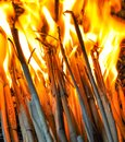 Fire flame of burning straw Royalty Free Stock Photo