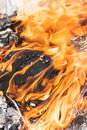 Fire flames around black tree log burning Royalty Free Stock Photo